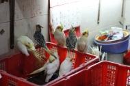 Yuen Po St bird market, Hong Kong