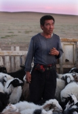 Nomad man with his sheep, Gobi desert