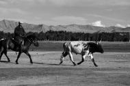Herder outside Khovd city, West Mongolia