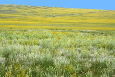 Khentii aimag, Eastern Mongolia, in the summer