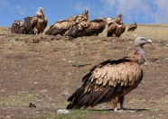Vultures at a Sky Burial, Litang, Sichuan
